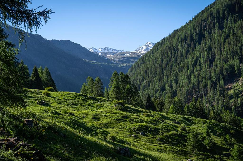 park-therapy abbracciare-gli-alberi vacanza-natura-trentino4